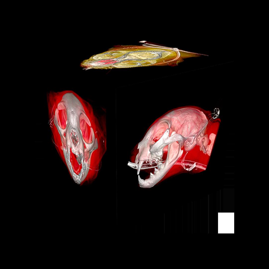 3D-CatHead